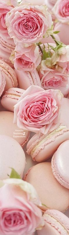 pink.quenalbertini: Roses and Macarons   Stunning Expressions