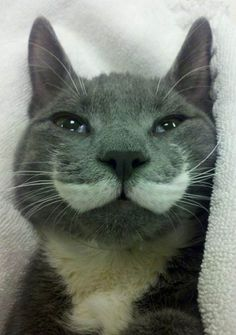 30-hysterically-hip-cats-with-mustaches-13