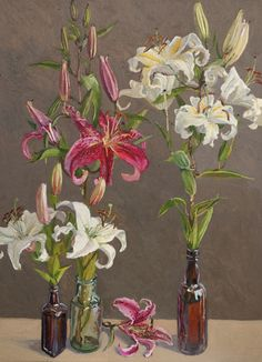 Lucy CULLITON:  Liliums