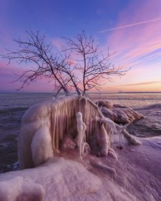 Frozen Trees and Cotton Candy Skies. Bradford Beach WI. [OC][1332 1664]