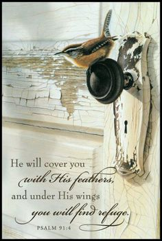 Psalm 91:4   faith Bible scripture verse.  Spiritual inspiration.   He will cover you with His feathers, and ...