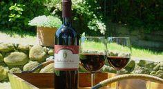 SAPORE AMOREVOLE PIEMONTE -  Abbinamento di Vino con la Bagna Caòda un   BARBERA D'ASTI