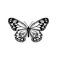 Butterfly vector image on VectorStock Small Butterfly Tattoo, Butterfly Drawing, Tattoo Sketches, Tattoo Drawings, Free Art Prints, Simple Illustration, Future Tattoos, Tattoo Inspiration, Small Tattoos