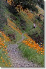 hite cove - wildflowers