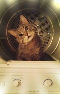 inetgate:  乾燥機の蓋を開けて30秒程目を離しているといつの間にか(ry  I leave the dryer open for thirty seconds… - Imgur