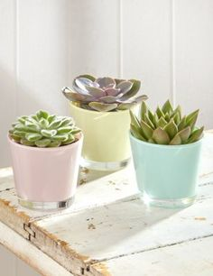 Succulents in pastel pots £25 from M&S