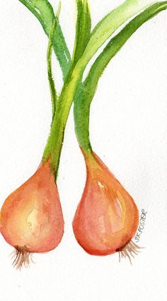 Original watercolor painting French Shallots by SharonFosterArt, $10.00