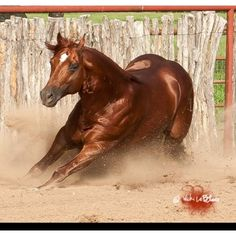 Smart Spook AQHA stallion - phenomenal reiner and sire