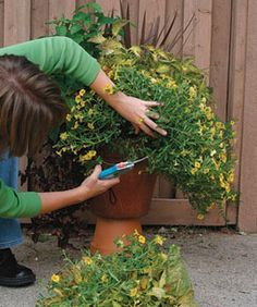 Container TLC - The right care and feeding are the secrets to keeping your pots lush and healthy all season long