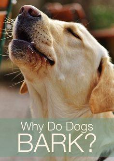 dogs dogs dogs dogs doggies dogs stuff things dogs labradors behavior