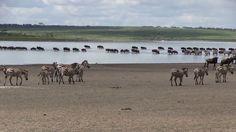 - Safari Crew Tanzania, Passionate about Africa -  #Tanzania #wonder of #nature #naturaleza #natura #Africa #safari #travel #viaggi #viajes www.safaricrewtanzania.com