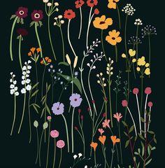 Flowers! #flowerillustration #carddesign #flowers #flowerpower #plantpower #wildflowers #flowershop #plantillustration #wip #illustration #illustrator #nature #flowerfield #lottedirks