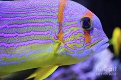Colorful fish Photograph