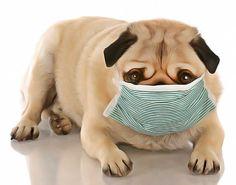 Résultats de recherche d'images pour «photos drole de chien qui tousse»