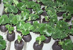 Garden Soil, Garden Plants, Garden Park, Green Garden, Outdoor Plants, Lush Green, Flower Seeds, Geraniums, Planting Succulents