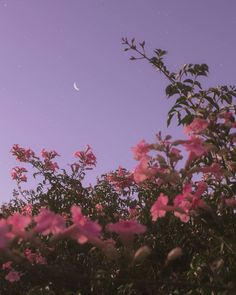 Android Wallpaper – Flower under night sky - Wallpaper - Bilder Tumblr Wallpaper, Android Wallpaper Flowers, Wallpaper Pastel, Night Sky Wallpaper, Iphone Background Wallpaper, Aesthetic Pastel Wallpaper, Aesthetic Backgrounds, Flower Wallpaper, Lock Screen Wallpaper