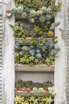 Detail of shutters filled with succulents at the Succulent Cafe in Oceanside - www.succulentsandsunshine.com