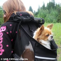 I love my Outward Hound Backpack Pet Carrier for toting Gizmo, my long-haired Chihuahua, on long walks and hikes. #dogs #pets