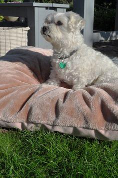 OVERSEAS- Petlife Dog pillow Felt-Fur-Blush