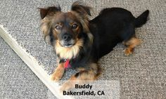 Google+ Buddy Bakersfield, CA