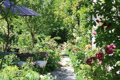 Freudengarten - 14 Blumen, die den Garten verzaubern ohne Arbeit zu machen