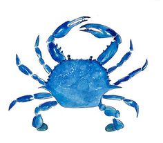 Blue Crab Print From Original Watercolor, Chesapeake Bay Blue Crab Wall Art Print, Maryland Blue Crab Home Decor Wall Art Print, Coastal Art Lobster Art, Crab Art, Jean Délavé, Beach Artwork, Coastal Art, Sea Creatures, Strand, Watercolor Paintings, Crab Painting