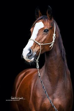 Blaze by on DeviantArt Cute Horses, Pretty Horses, Horse Love, Horse Photos, Horse Pictures, Most Beautiful Horses, Animals Beautiful, Equine Photography, Animal Photography
