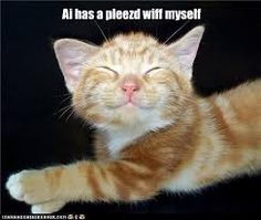 Image result for picture smiling cat i has a pleased with myself