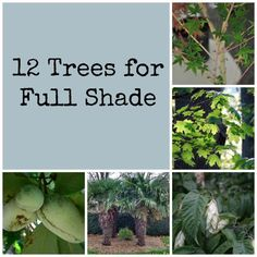 If you have an area that is full shade (under 3 hours daily), try planting one of these 12 trees. They have adapted to tolerate less sunlight.