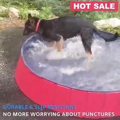 Backyard Ideas Discover Multi-Use Portable Pool The pool is deep enough for your dog to get completely soaked and cool off by either sitting standing or swimming! Portable Pools, Animals And Pets, Cute Animals, Dog Accessories, Dog Care, Dog Grooming, Dog Toys, Puppy Love, Fur Babies
