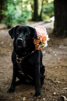 Dog with floral collar in an outdoor wedding ceremony.