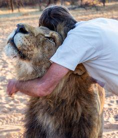 В Южной Африке мужчина заменил льву мать