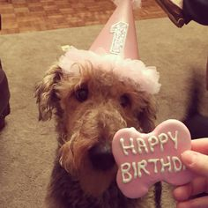 Airedale Terrier Birthday Hat