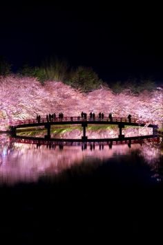Sakura Hanami in Japan Beautiful World, Beautiful Places, Cherry Blossom Japan, Cherry Blossoms, Art Asiatique, Japanese Landscape, Blossom Trees, Nice View, Beautiful Landscapes