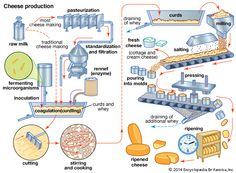 cheese: cheese production process [Credit: Encyclopædia Britannica, Inc.]