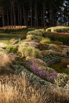 Hill Garden - Queenstown, New Zealand.