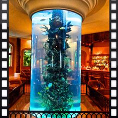 Fish Tank in the Bar. Want this for my indoor pool