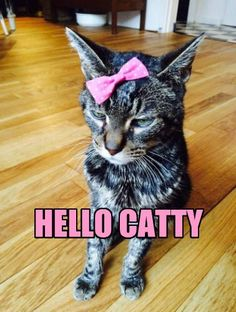 HELLO CATTY http://chzb.gr/1QhvzyV