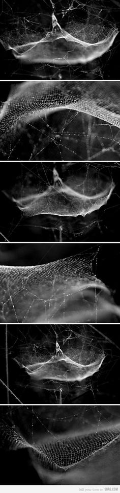 Spider web are used as drop nets and traps Spider Art, Spider Webs, Web Design, Graphic Design, Motion Design, Natural Wonders, Les Oeuvres, Digital Art, Portrait