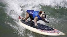 Resultado de imagen para famosos con bulldog ingles