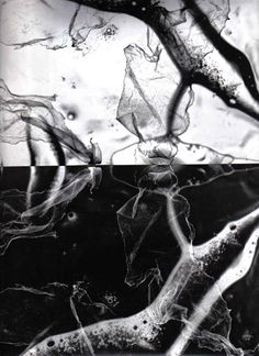 Photogram 2 by panda-pie on deviantART Dishwashing liquid and plastic?
