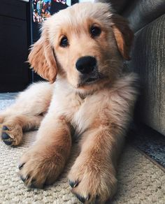 Posted by @gloriousgoldens