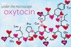 """Embora seja referida normalmente como a """"hormona do amor"""", a oxitocina é cada vez mais vista como uma substancia química produzida pela glândula pineal (interior do cérebro, associada às emoções humanas) que se relaciona com muito mais do que juntar casais. Nova investigação sugere que a oxitocina desempenha um papel crucial na criação, facilitação e …"""
