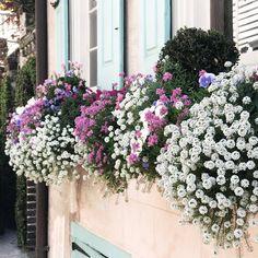 A Bit of Charleston South Carolina, Charleston, Traveling By Yourself, Floral Wreath, Gardens, Plants, Flower Crowns, Outdoor Gardens, Garden