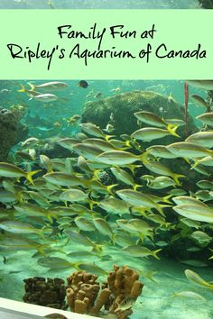 Visiting Ripley's Aquarium of Canada - Toronto, ON - Family Food And Travel
