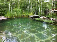 Natural Pool / Piscine naturelle / Étang baignable par  www.symbiosepaysage.ca  https://fbcdn-sphotos-a.akamaihd.net/hphotos-ak-snc6/250855_10151012930416422_490432558_n.jpg