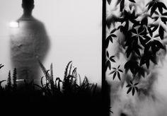 Dissolving or Emerging? Photograph by Tamara Danoyan