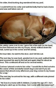 Mind Blown Childhood Ruined   Tired-Looking Dog - Win Picture   Webfail - Fail Pictures and Fail ...