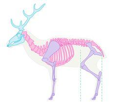 deer skeleton drawing