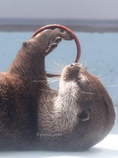 Playing otter